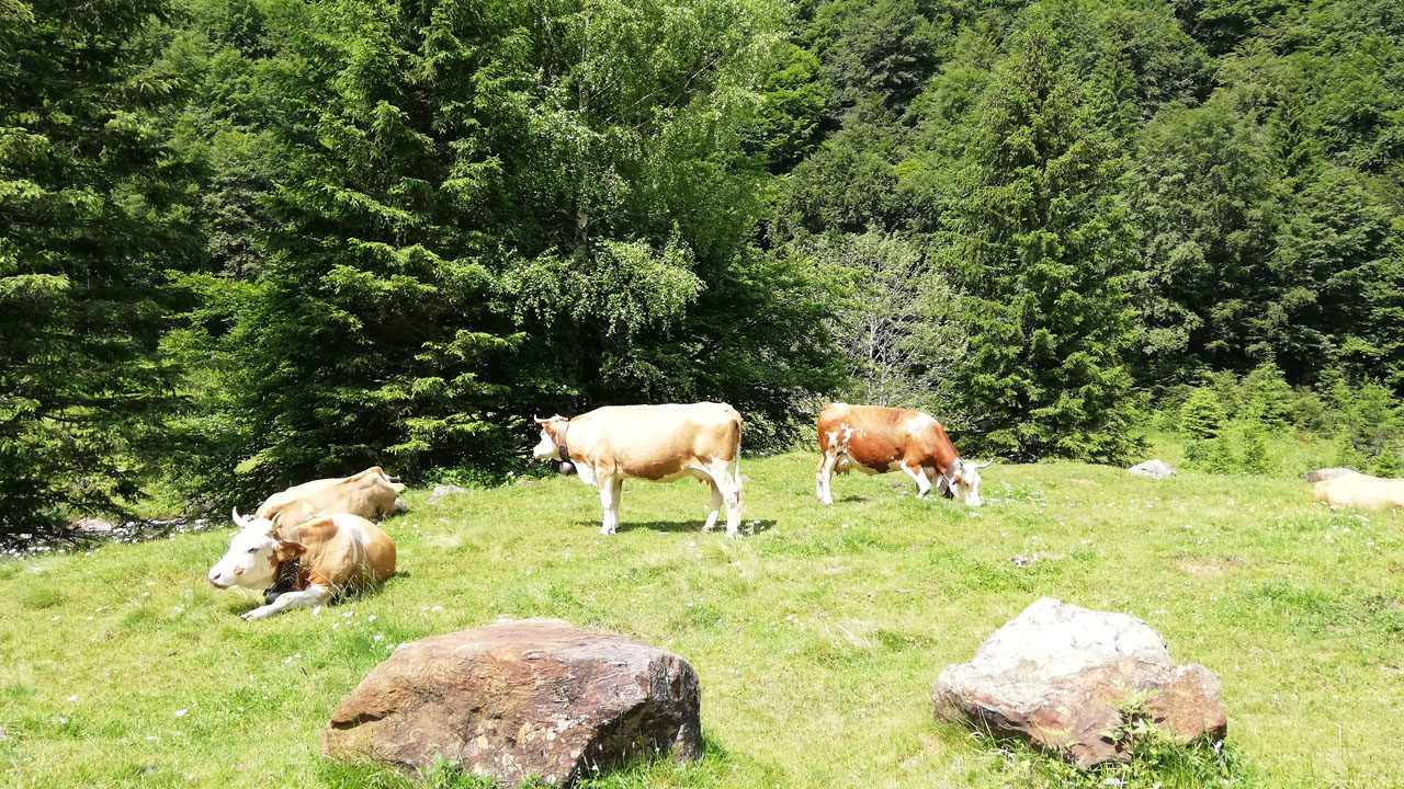 Loana-mucche-Laura-Minacci